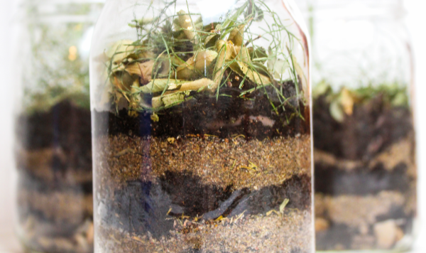 The DIY Wormery Project: Make Your Own Wormery!