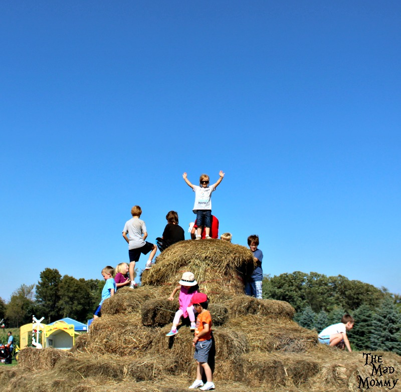Playing King Of The Hill on the hay mountain at the Minnetonka Orchards!