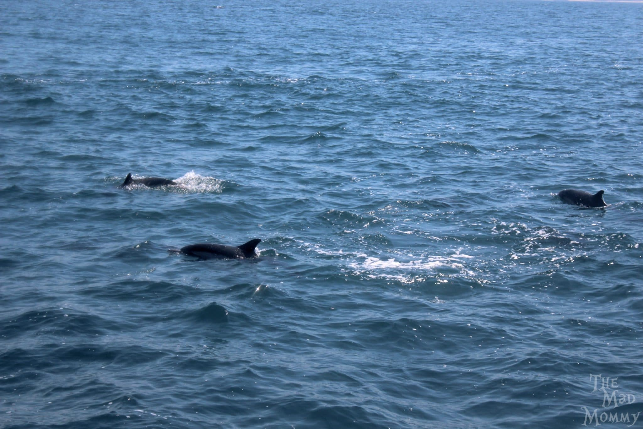 Getting closer to the dolphins.