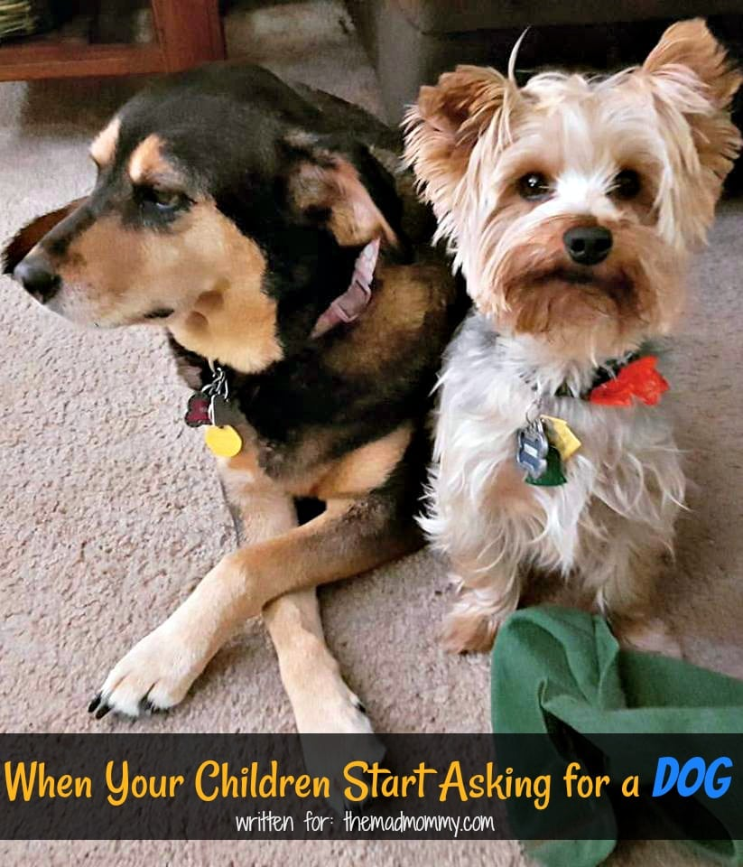 In this article, we are going to take you step-by-step through the process of getting a dog, if you so choose. We hope you find help here and can make the best decision for your family.
