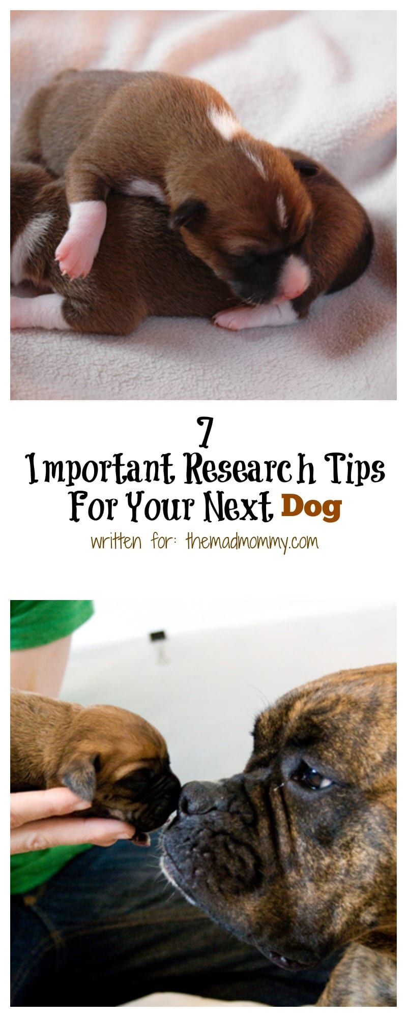 To help make sure you get things right when finding your perfect canine, we've come up with a list of 7 quick research tips to remember when buying a dog.