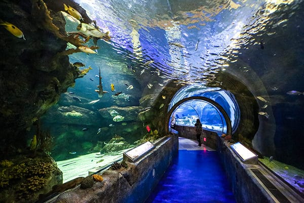 Take a stroll through the ocean, in the depths of the Mall of America! There are tons of sharks, sea turtles, eels, starfish and more! You can interact with them in SEA LIFE's touch pools or, you can even book your own adventure and Swim with the Sharks!