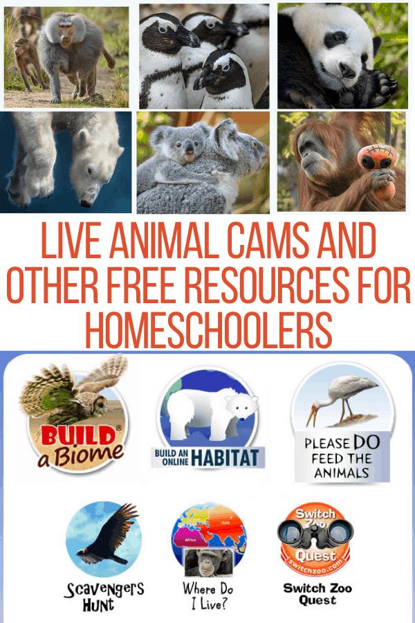 live animal cams