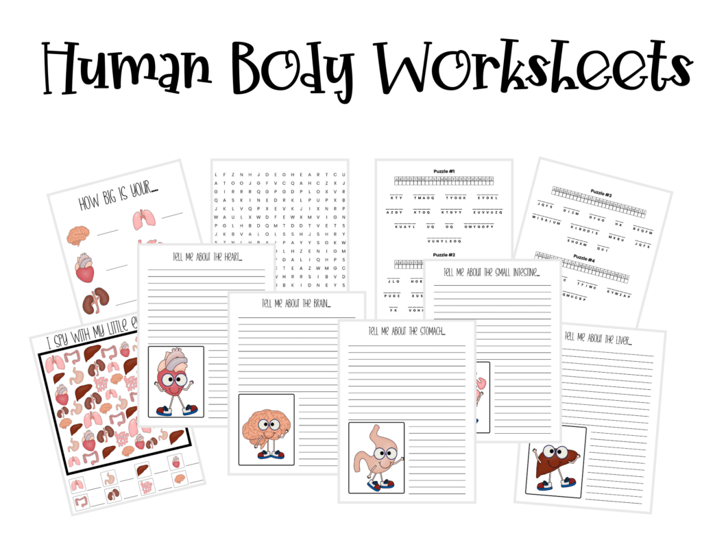 human body worksheets for homeschoolers