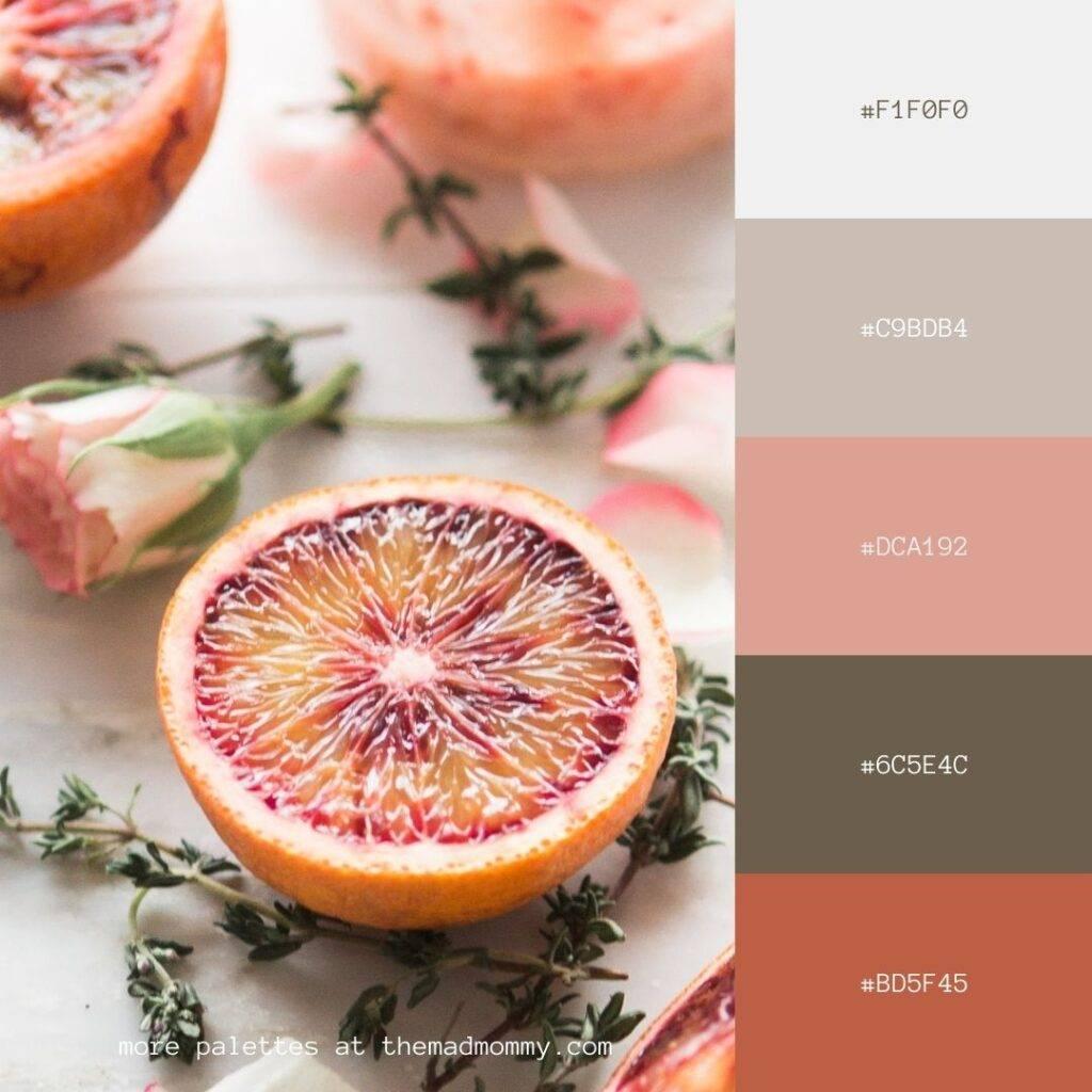 Blood Orange Rose Color Palette