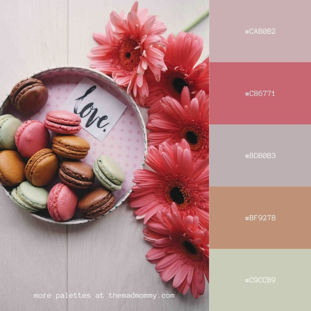 macarons and flowers color palette